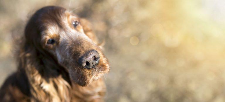 Old Dog Care