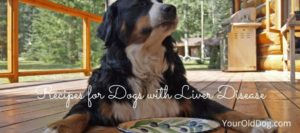 recipes for dogs with liver disease