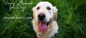 flaxseed for dogs