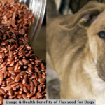 flaxseeds for dogs